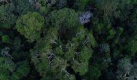 Juiz suspende transferência da gestão de florestas para Agricultura