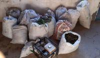 Cerca de meia tonelada de maconha é apreendida na Bahia; homem é preso e outro suspeito é morto em confronto